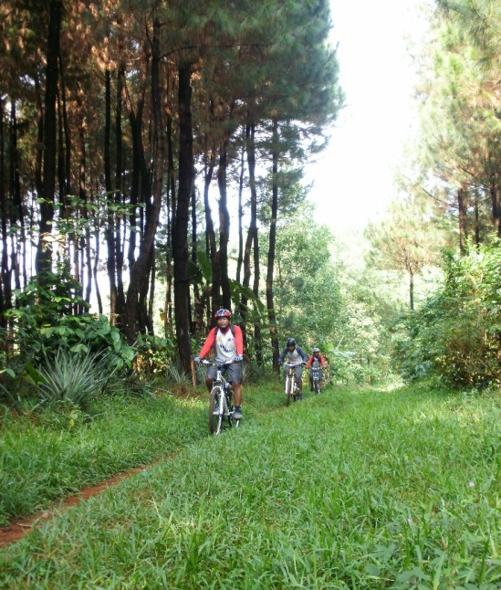 Single track @ hutan pinus