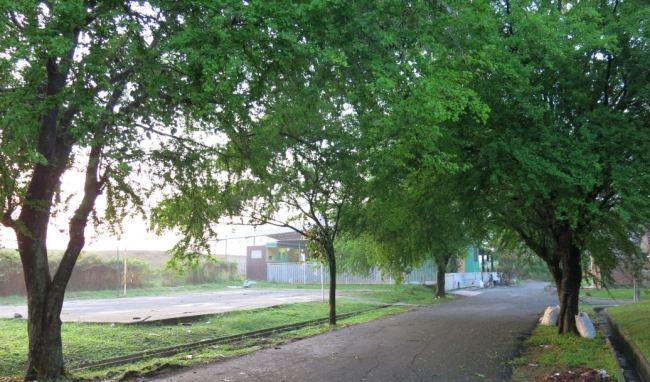 Green corridor - Taman Cibodas